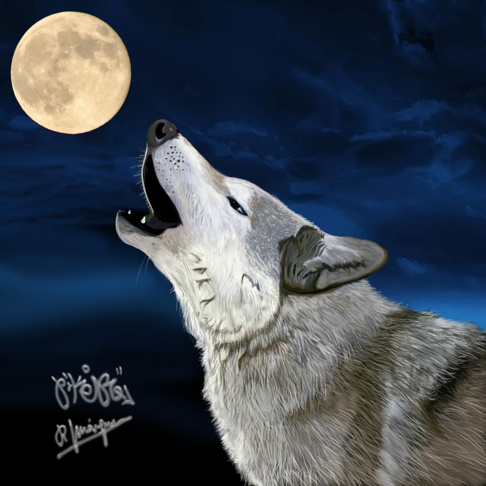 cuadro lobo aullando